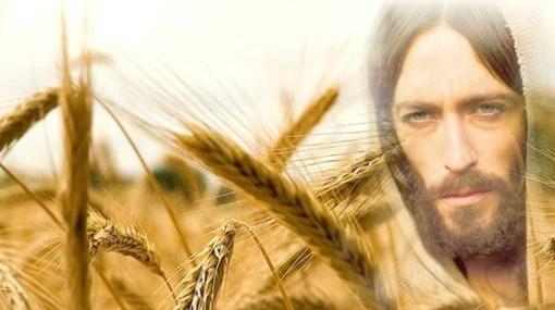Jesús y la mies